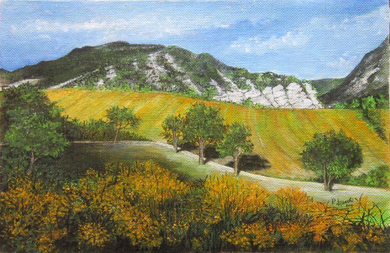 Ginestre e campi a Liserna